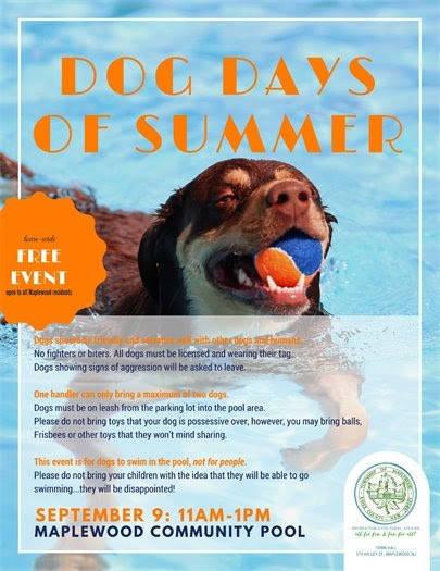 39405e8e03572c14449b_dog_days_of_summer.jpg