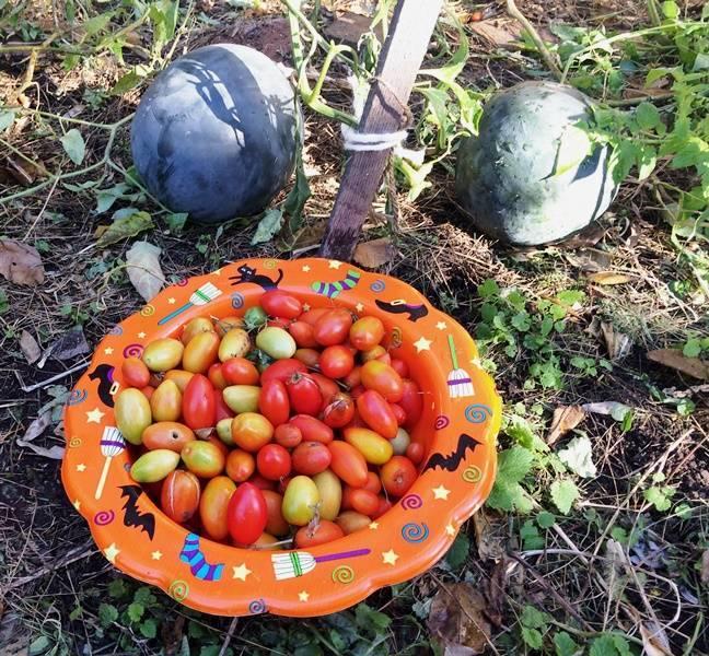 4254e732a767fe686d92_Peace_Garden_harvest.JPG