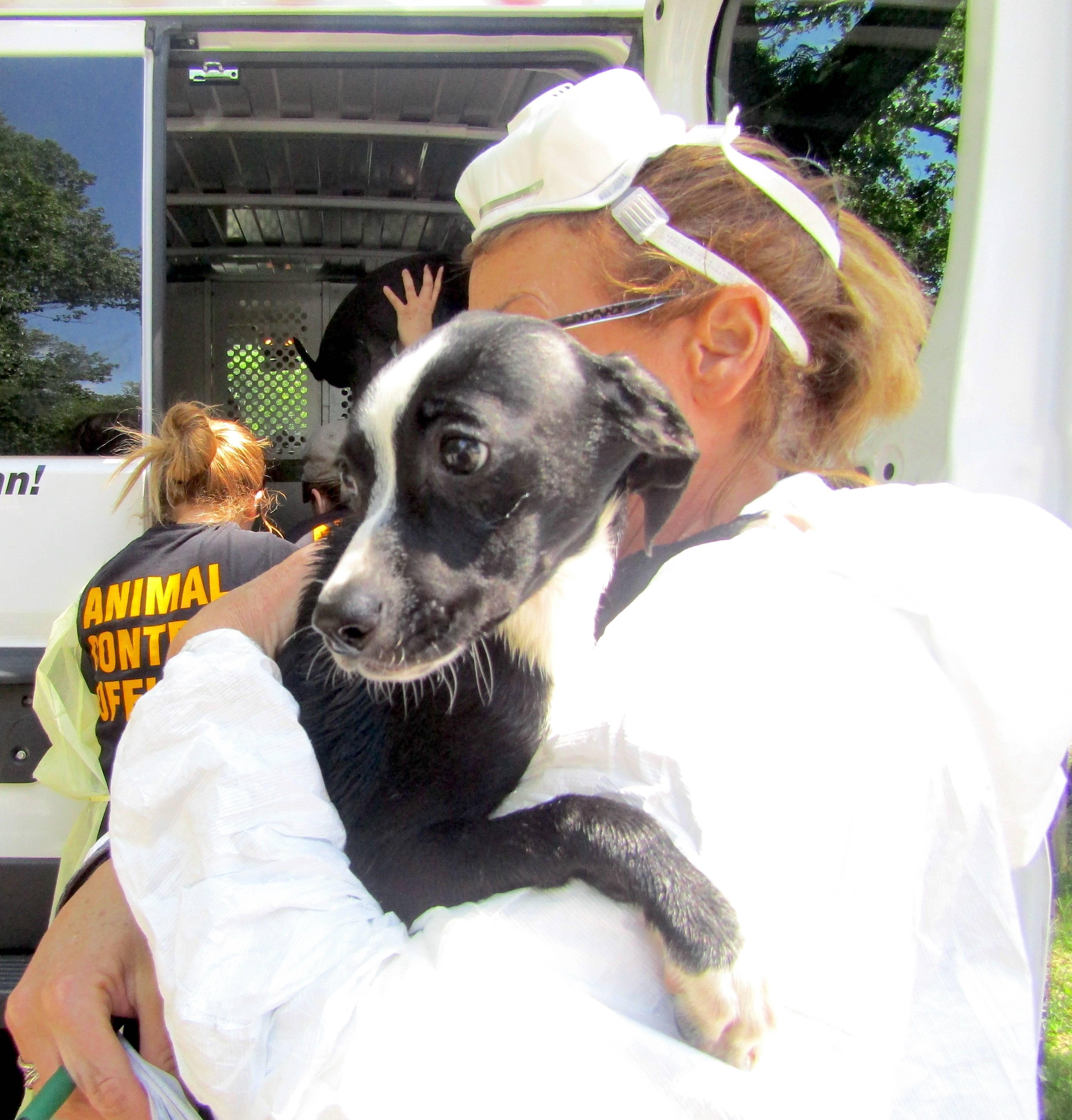 425e62b415a4828962f9_cb383b6417f549800e76_8162ccf60c700e3c3829_Roselle_animal_cruelty_case_3.JPG