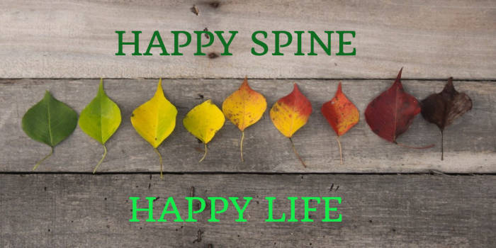 46cdbcb0ac8711e9f2d8_happy_spine_happy_life.jpg