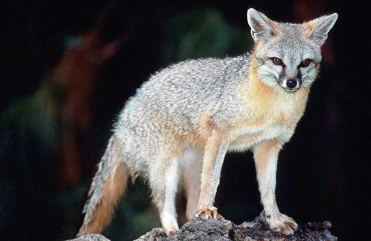 46df6d60b3e83f7453f5_fox.jpg
