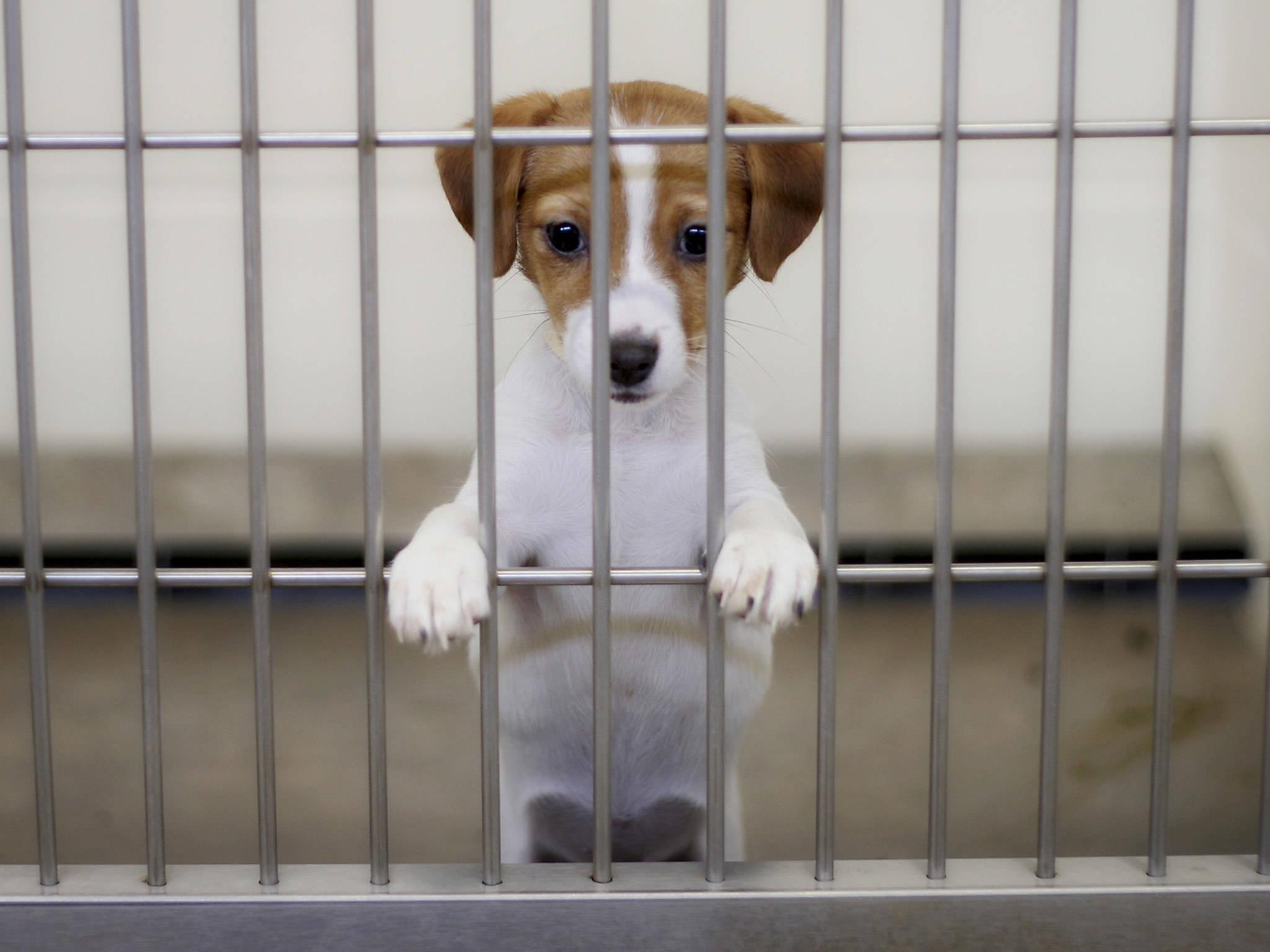 4fe79f597d4f4184f307_puppies-caged-1.jpg