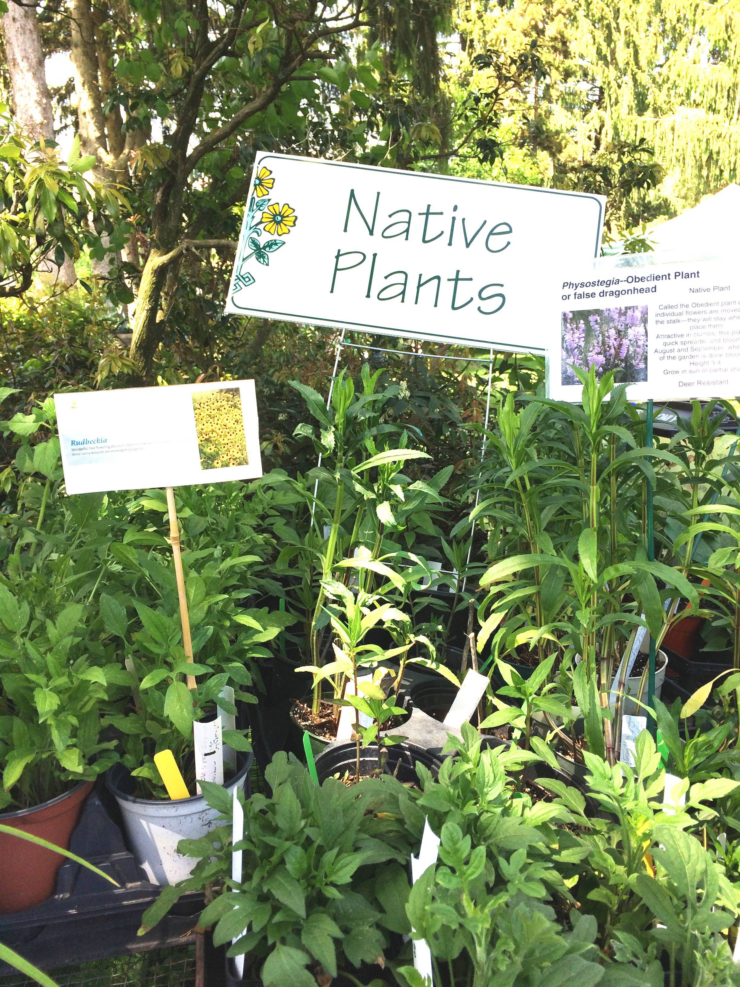 5c6a54c97cc8ec4dc85d_Native_Plants.jpg