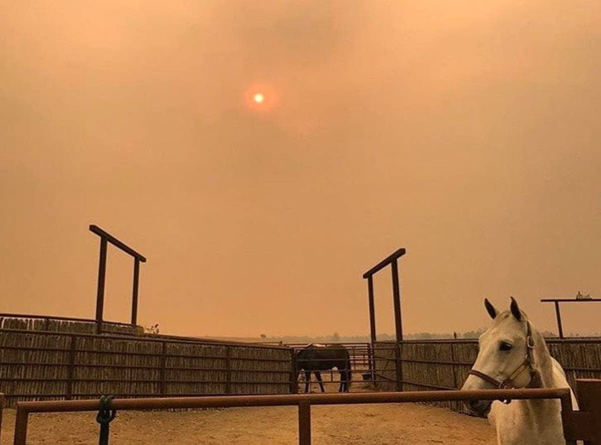 5f3f0a24941f9512f9a2_California_horses_after_fire.JPG