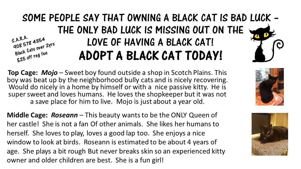 620abddeacf48f8bba9e_black_cat.jpg