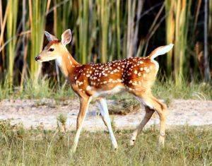 63e1c4802a8452f80bcf_baby_deer.jpg