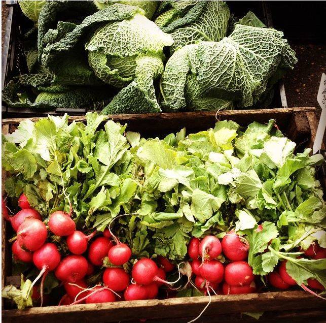 682dcf0c8d85f107e530_Cabbage_and_Radishes.JPG