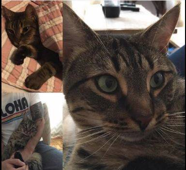 Missing Cat Have You Seen Moe Nutley Nj News Tapinto