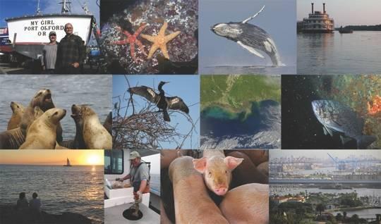 7b0a81ba26dada3e5215_Oceans_III-collage540.jpg