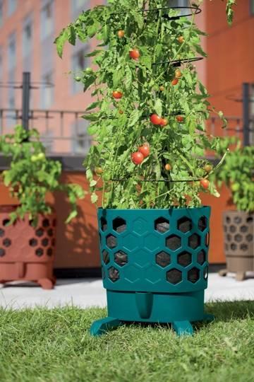Grow An Abundant Tomato Harvest In A Pot Clark Nj News