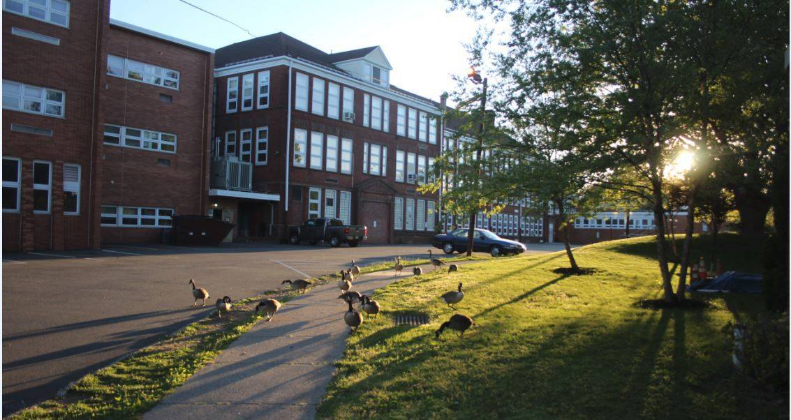 9042e8511245a5ab3cdf_Library_High_School_Canada_Geese_May_2017.JPG