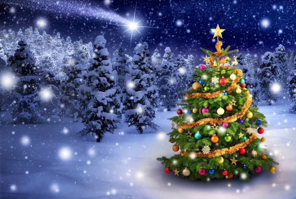 North Somerset Christmas tree recycling