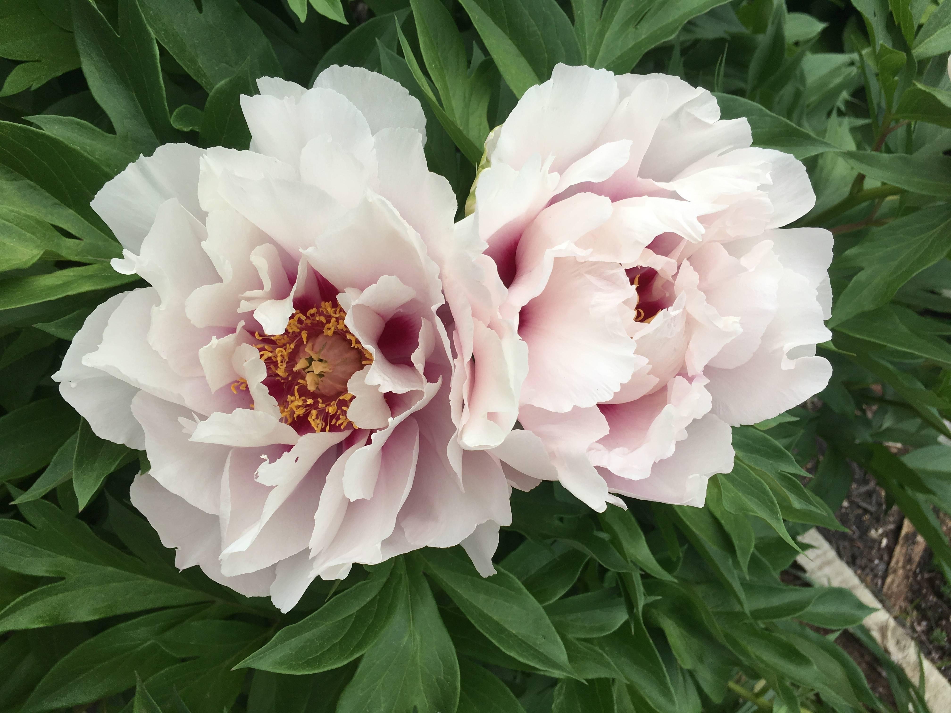 97d2bfb71e373c953fd0_flowers.jpg