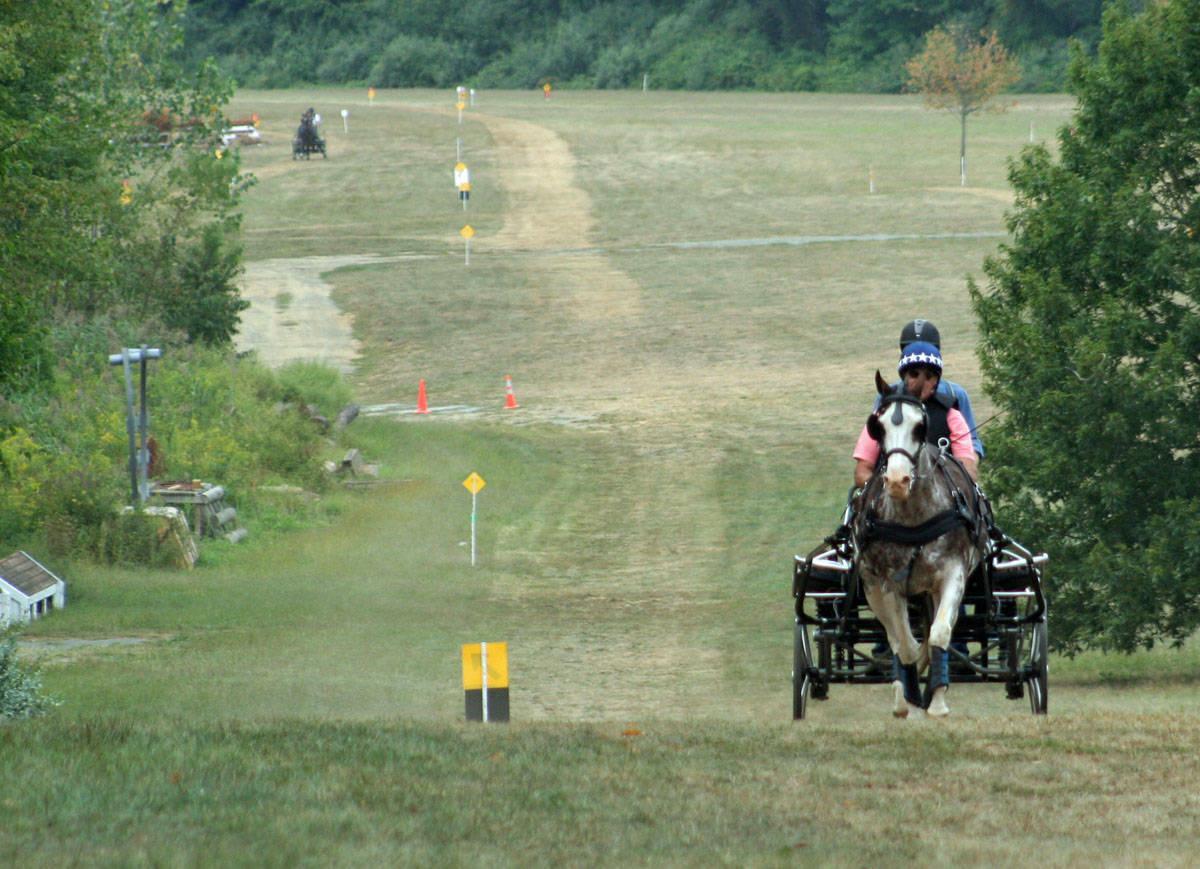 9c7b9b543bbf90fc458b_Horse_Park_Driving.jpg