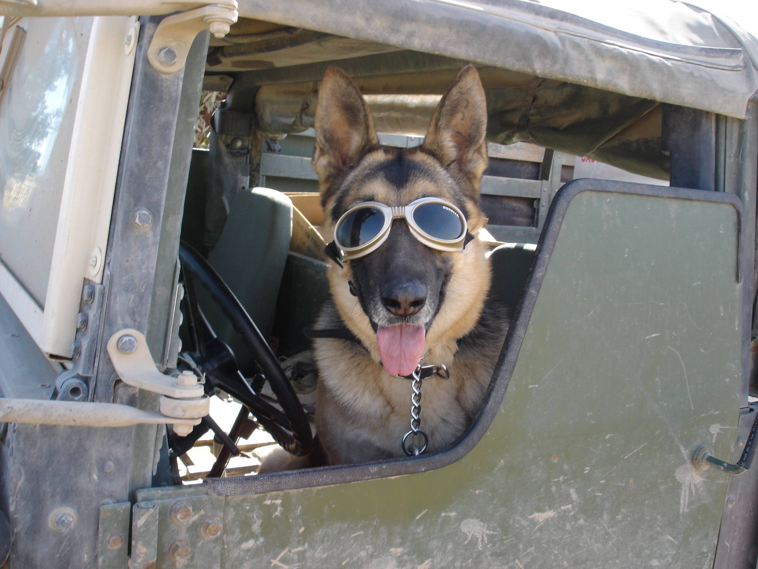 9c93f54ad604399429ca_War_Dogs_Doggles.JPG