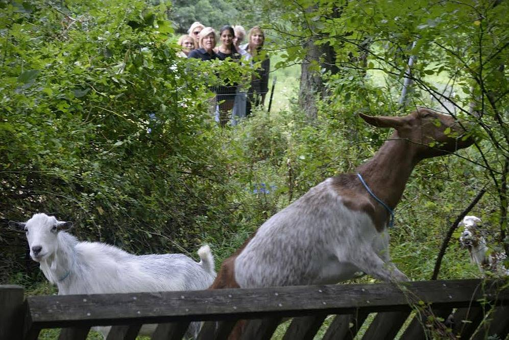 9fb152bdf98285dfc1a8_Goats_and_people.jpg