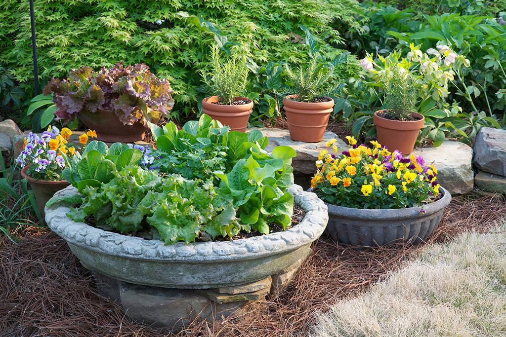 aaf331b46dd3169caac9_container_garden_3_horiz_Bonnie_Plants_2.jpg