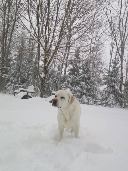 b31a6cb01256905b15dd_SNOWdayDogBBA.jpg