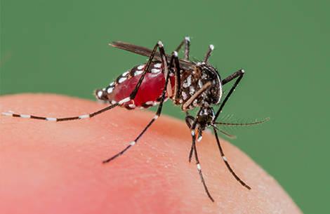 b852a9f4969980bcf383_zika-virus-quiz-promo.jpg