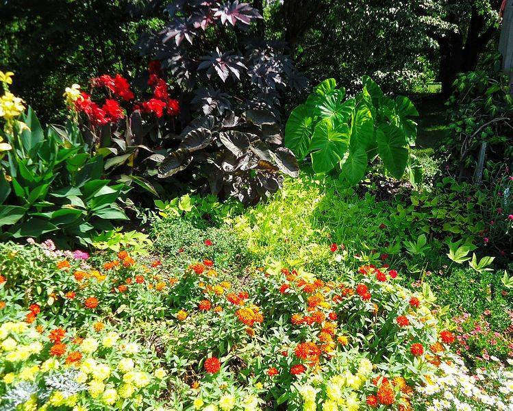 bebbca917e6128c231bf_Rutgers_Gardens_in_New_Brunswick_New_Jersey_flowers_and_bushes_Image_Number_28.jpg