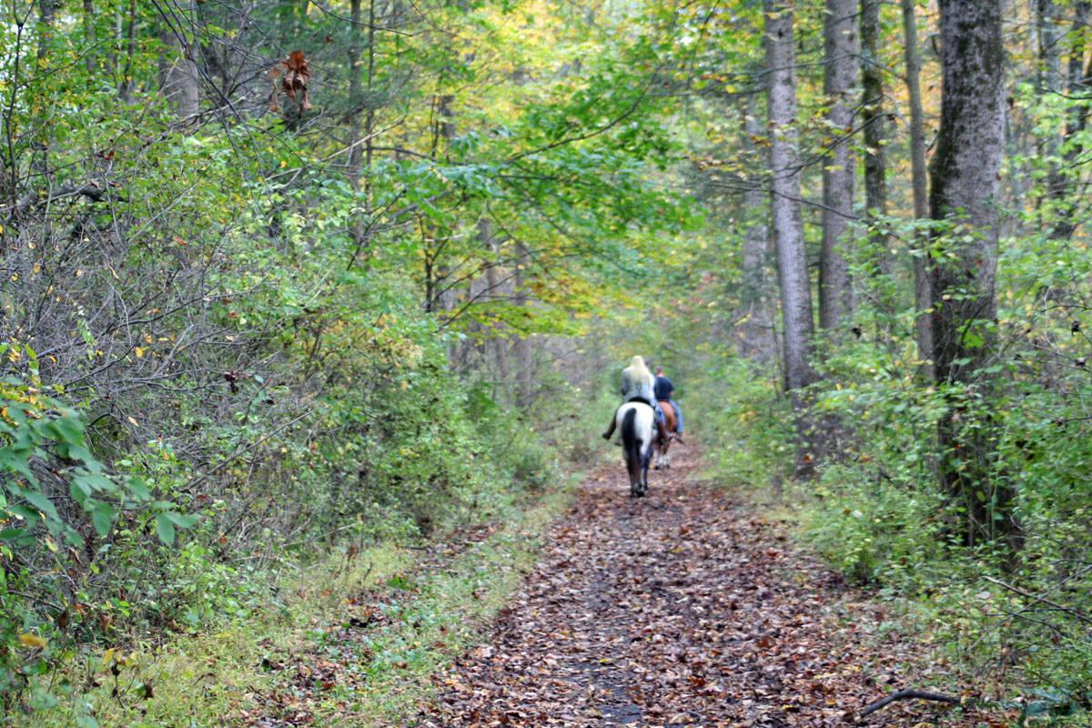 bedbeaa879c67f058ae9_horse_on_trail.jpg
