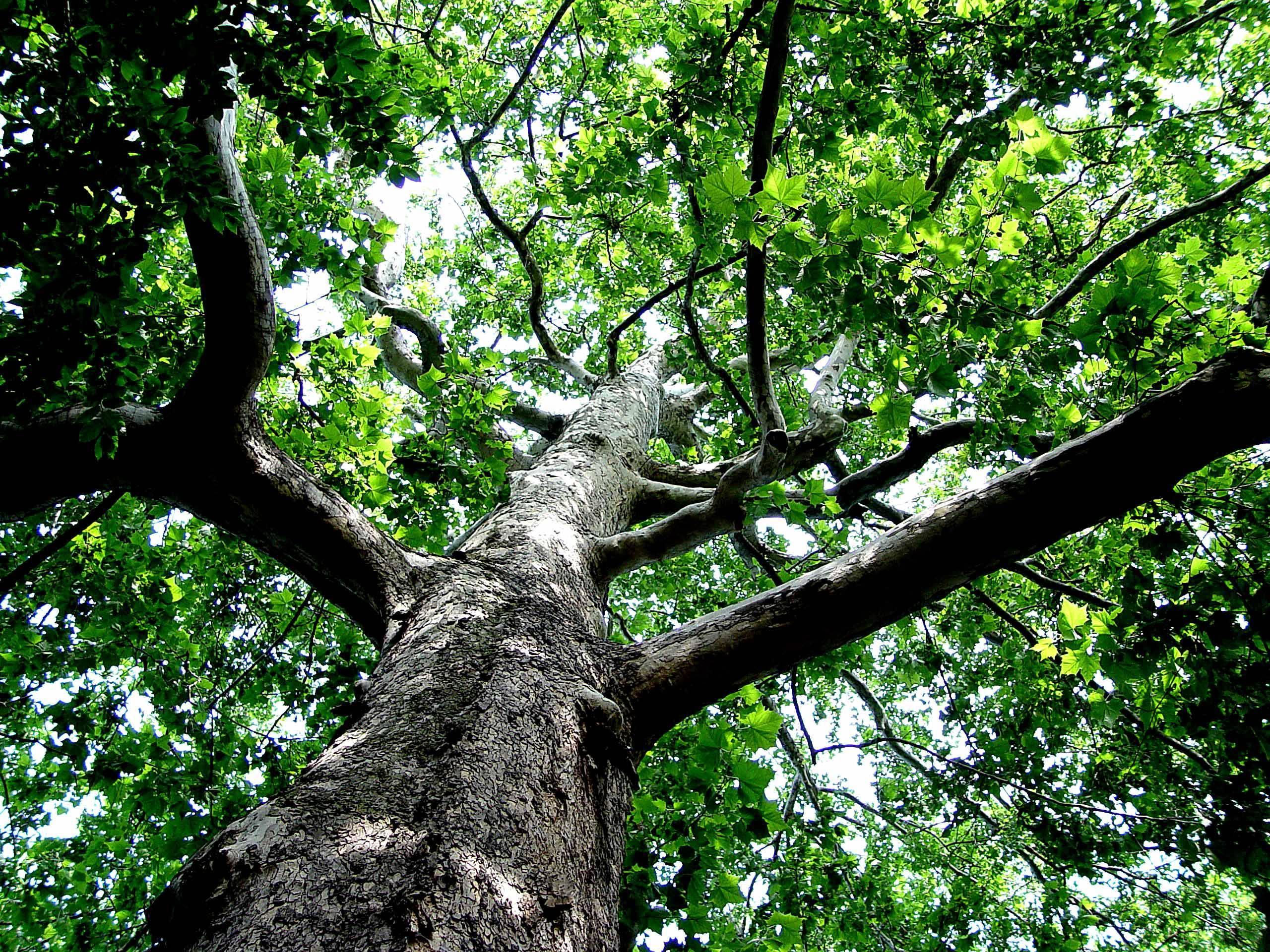 c2d35f54378d301f906b_Majestic_Tree.jpg