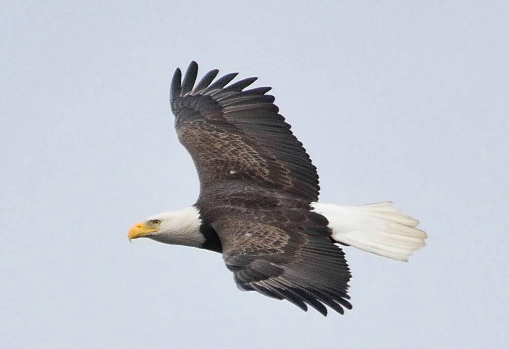 c3dd8745dad6db810baf_eagle.jpg