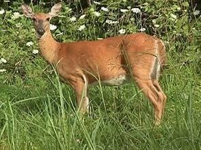 c6b8f557415bf6dc07d5_86bbe921476def2c415c_Deer_Hunt.jpg