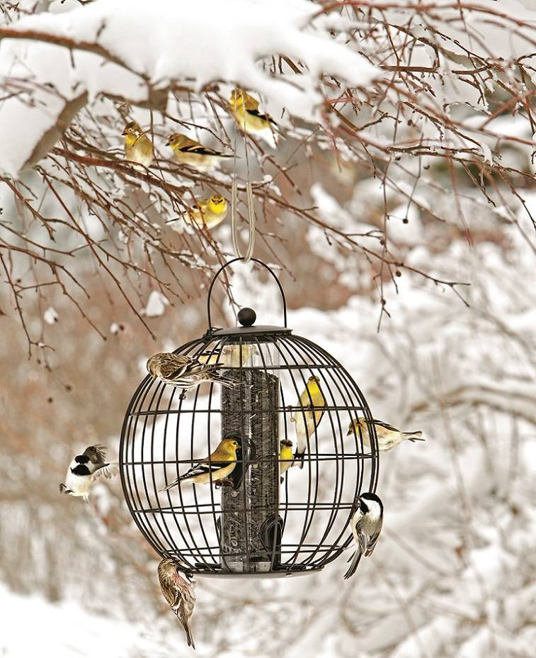 cabf0be61c503ce4aa53_Birds_on_feeder_in_landscape_photo_credit_Gardeners_Supply_Company_-_Copy__1_.jpg