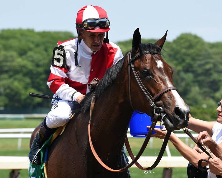 00354387ca90722e323e_Songbird_the_racehorse073.JPG