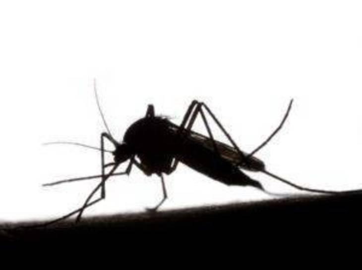 00705eabb71d0ab5f160_e8473436854744a4a66b_mosquito-silo-300x224.jpg