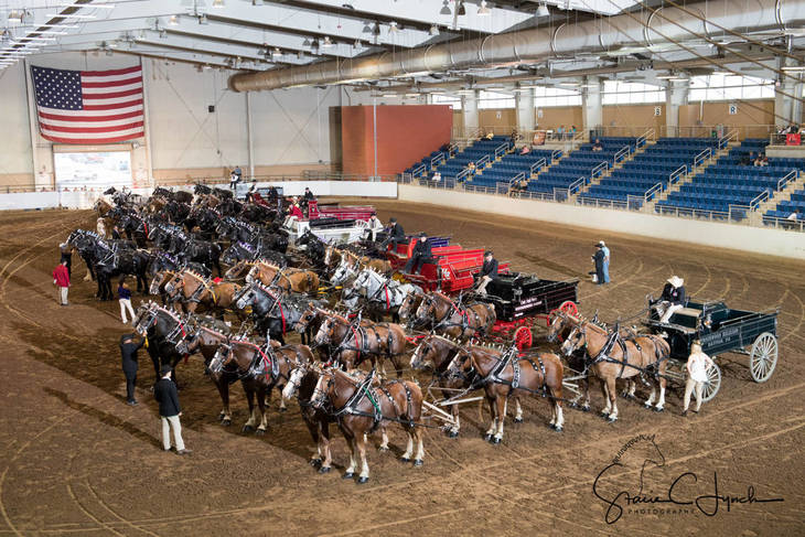 0159710cacf30f6a419e_Keystone_International_Draft_Horses197.JPG