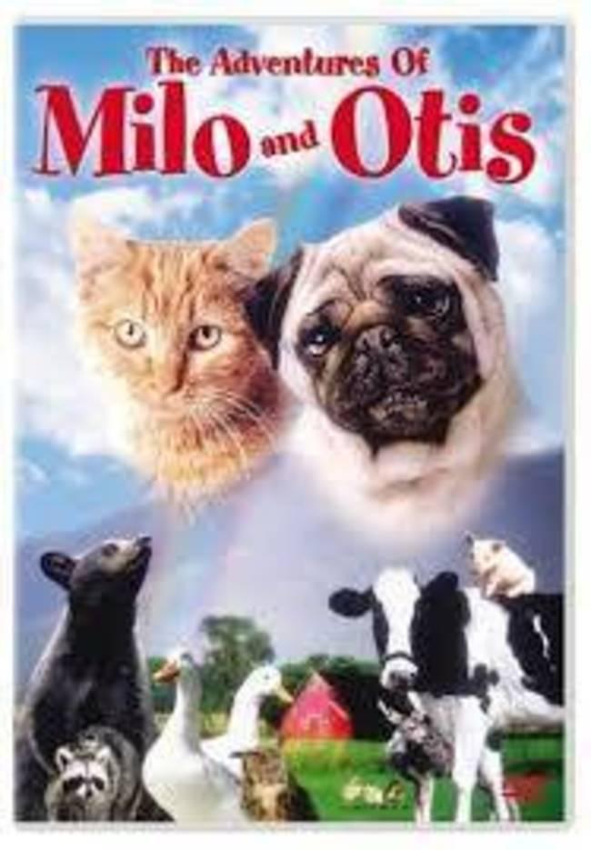05b19877beb091ddcb4e_Milo_and_Otis.jpg