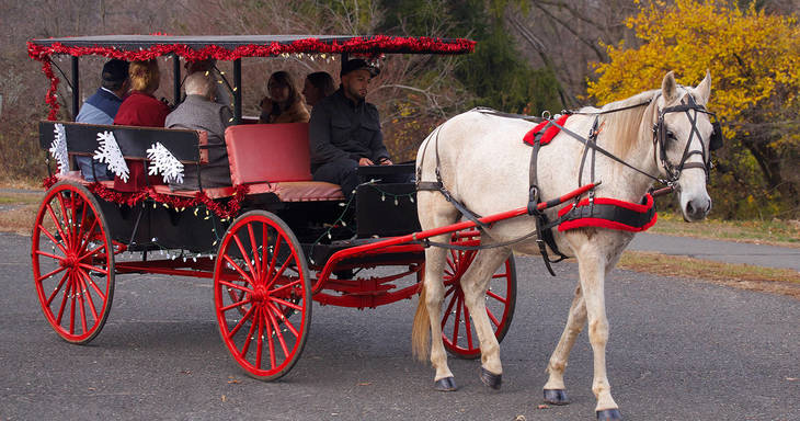 05cf664fb60c49fc7542_Horse_and_Carriage_2016.jpg