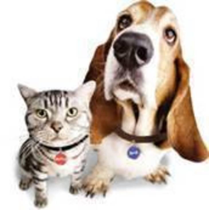086c26f0b58cc93499c1_dog_cat_licenses.jpeg