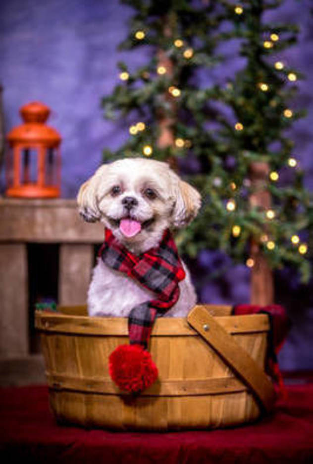 "Morris Animal Inn Celebrates the Season with ""Howliday"" Pet Photos"