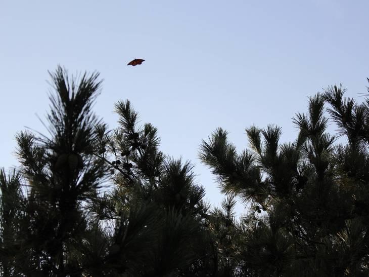 0e2840aa530d97d31d54_Butterfly.5.JPG