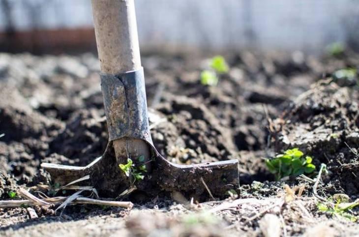 0e3a8e277b327dd6e193_gardener.jpg