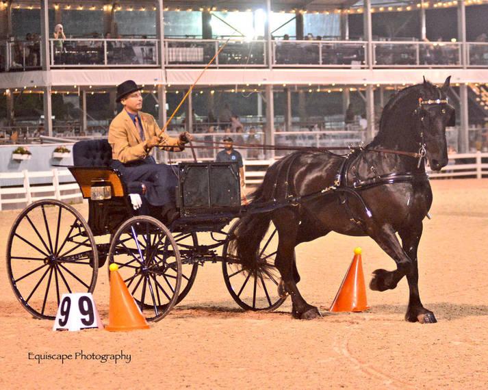 18229bf4eb659c21e9ea_Devon_Horse_Show_Driving3.JPG