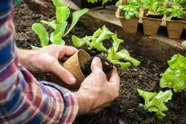 1a61971a97f94bab739f_master_gardeners.jpg