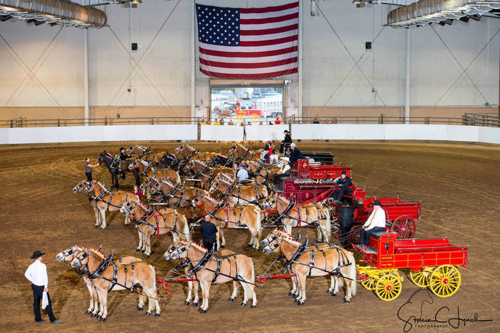 1afb5f4a4f8f17854717_Keystone_International_Draft_Horses188.JPG