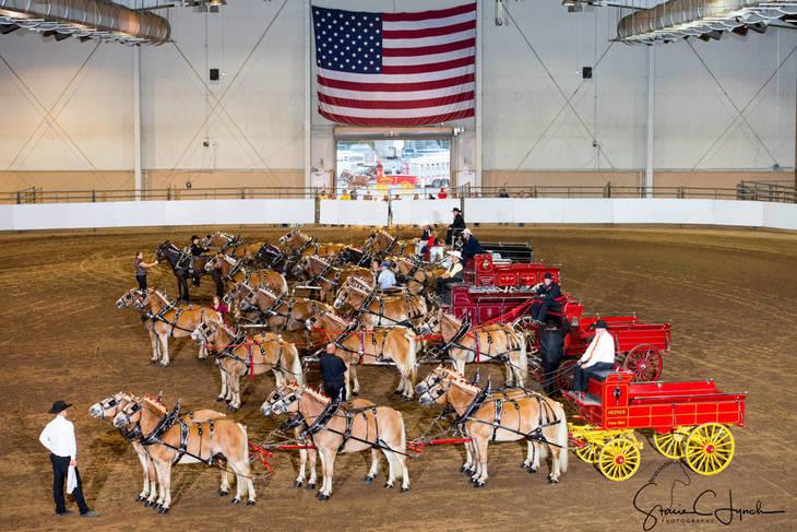 1afb5f4a4f8f17854717_Keystone_International_Draft_Horses188.JPG