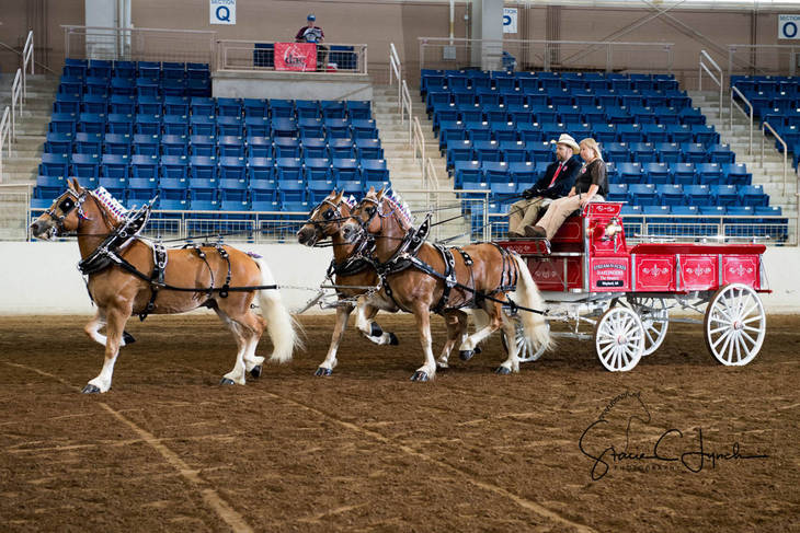 1c8eded2e89a5938f405_Keystone_International_Draft_Horses191.JPG