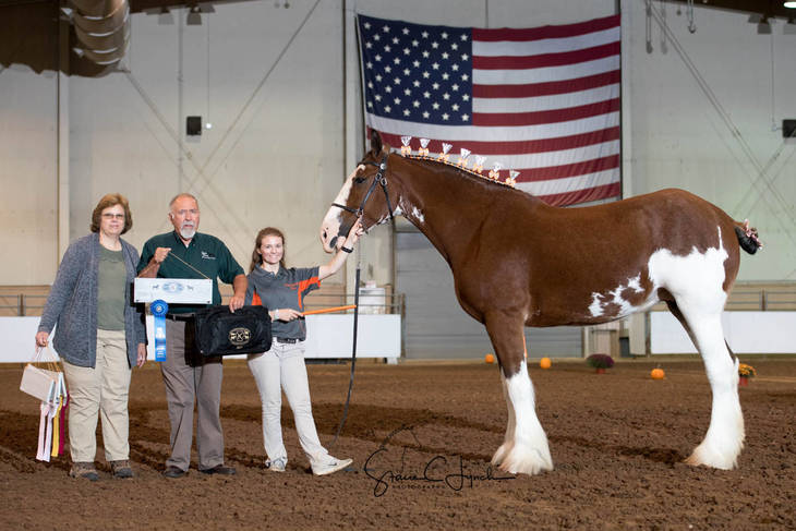 21828e50130827db83c7_Keystone_International_Draft_Horses183.JPG