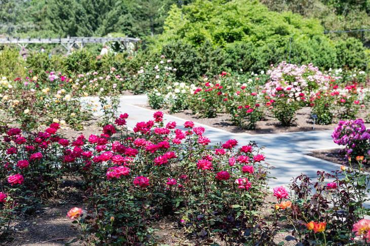 Franklin Township: Free Rose Pruning Workshop at Colonial Park Rose ...