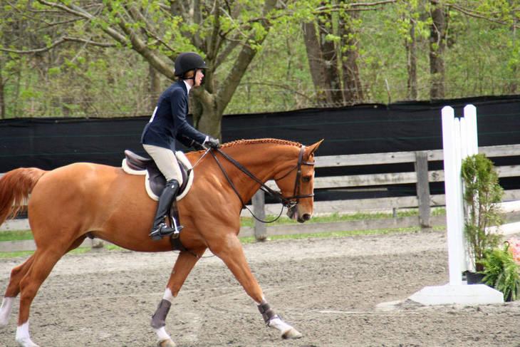 24750b55ff5af8b2bf22_Garden_Stat74e_Horse_Show_18_By_Lillian_Shupe.JPG