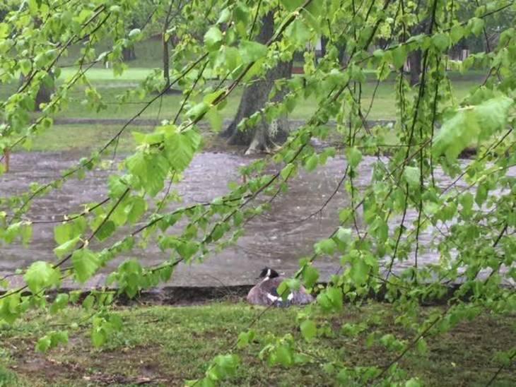 261fe6c83d45eacea08a_Kingsland_Park_Flood_May_5_2017_b.jpg