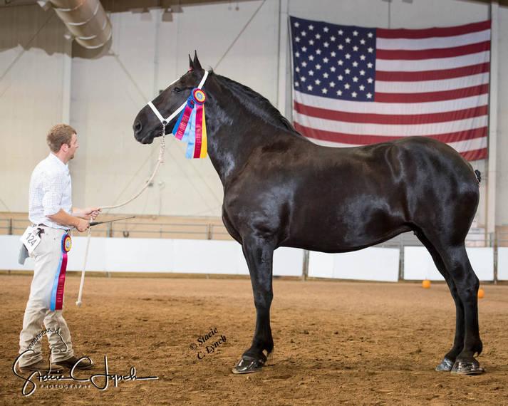 2af729fdadd1a9afd10e_Keystone_International_Draft_Horses180.JPG