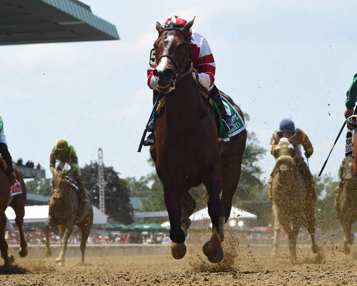 2e13dc1b0dd070fc8eb7_Songbird_the_racehorse076.JPG