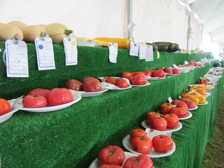 34e7a05ad5f1a47e5411_Tomatoes_Fair_2017.JPG